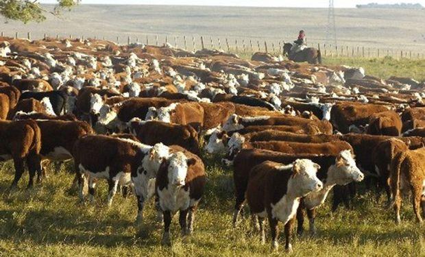Los parásitos internos que afectan a los vacunos generan mermas significativas en la ganancia de peso de los animales.