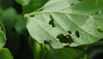 Consejos de tres expertos para controlar dos plagas peligrosas