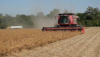 La soja resistente a sequía ya se cosecha en Estados Unidos