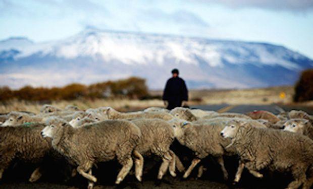 Actualmente el cordero patagónico pierde mercados de exportación.