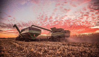 En apenas dos años, Córdoba avanzó siete posiciones en el ranking mundial del maíz