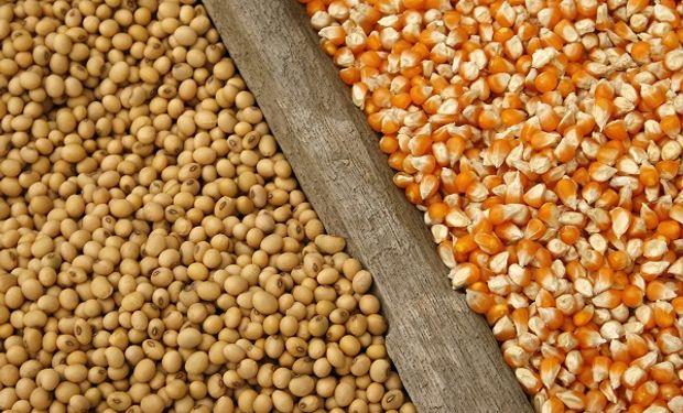Fuerte suba para la soja y repunte para el maíz por un inusual dato del USDA: cuánto se pagó en Rosario