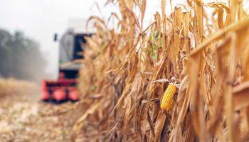 El mercado se anticipa a un recorte para la cosecha de maíz en Sudamérica