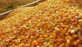 El USDA sorprendió al anunciar un fuerte incremento de los stocks de maíz