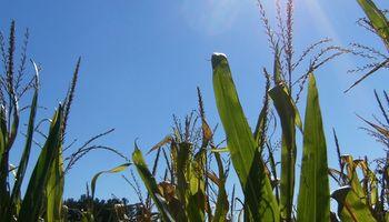 El Servicio Meteorológico Nacional alerta por la persistencia de elevadas temperaturas