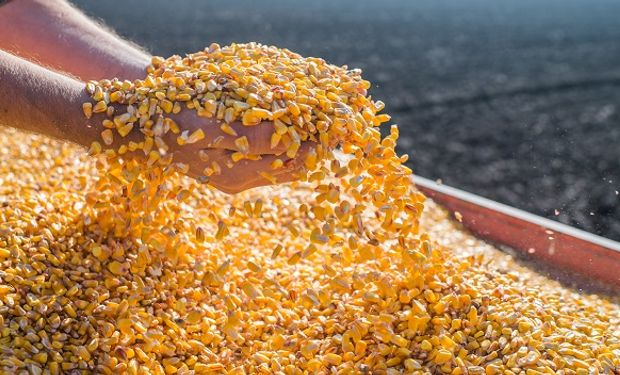 El desplome del petróleo arrastró al maíz, que alcanzó un mínimo de 3 años y medio