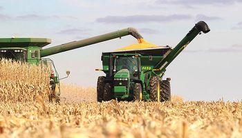 Comenzó la cosecha de maíz en Estados Unidos y hay bajas generalizadas en Chicago