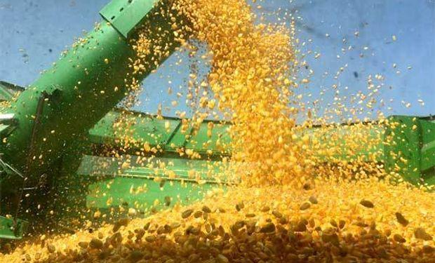 El maíz argentino gana mercados.