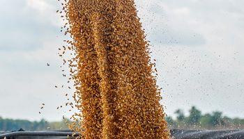 Clave para el mercado de granos: la expectativa para un informe que se publica hoy