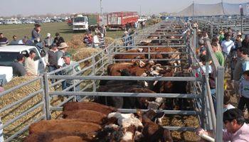 Los versátiles corrales de Farmquip en el sector ganadero de la muestra
