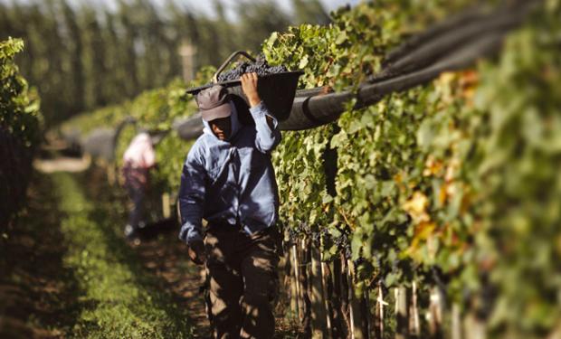 El sector vitivinícola aportó 70 mil litros de alcohol para afrontar el coronavirus