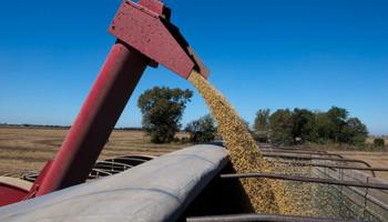 Siembra récord: si el clima (y la política) acompaña, Argentina podría cosechar 140 millones de toneladas