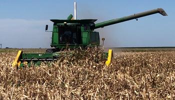 La cosecha de maíz comenzó con rindes por debajo de lo esperado