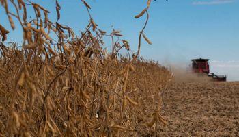 Con una tonelada de soja se compra un 39% menos de glifosato que hace un año