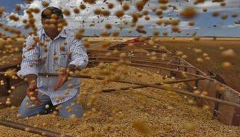 Brasil: la crisis ya golpea a los agricultores