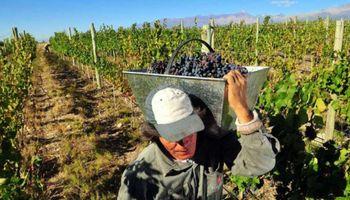 Radiografía de la industria vitivinícola: destacan que el 43 % del precio final de una botella se lo lleva el Estado