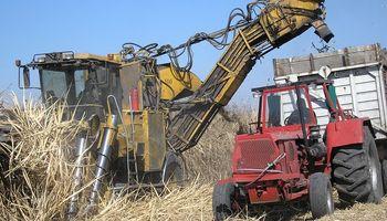 Ya se cosecharon más de 200 mil hectáreas de caña en Tucumán