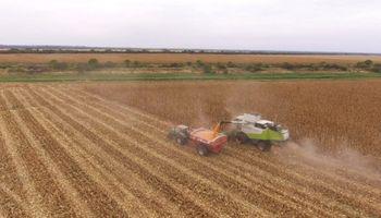 Sequía y heladas: el duro impacto del clima sobre la cosecha brasileña
