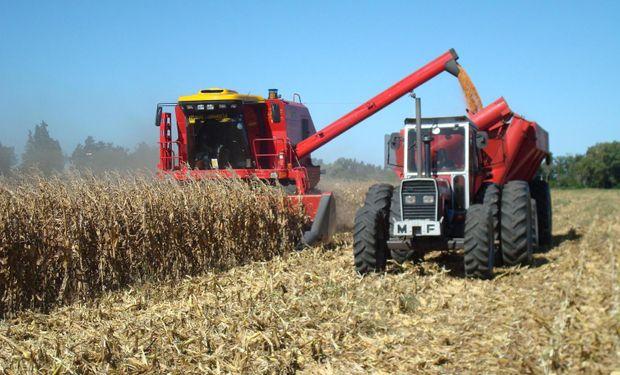 Maíz: avizoran cosecha de 23,8 M de toneladas