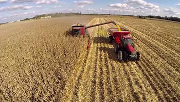 FAO pronosticó una cosecha favorable de maíz para Sudamérica