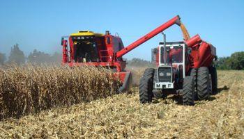 Cosecha de maíz sería de 23,5 M. de toneladas