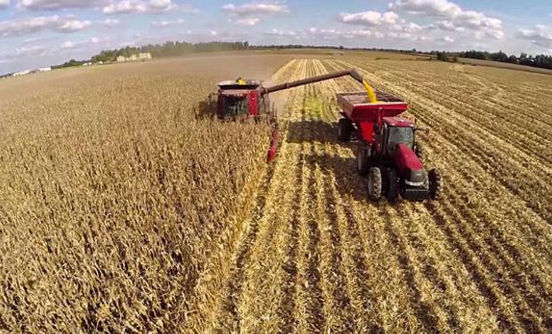 En Argentina, la superficie plantada aumentó un 5 por ciento desde el nivel récord del año pasado, alcanzando 7,25 millones de hectáreas.