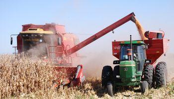 El maíz sube en el mercado local