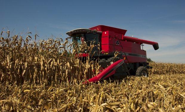 Se pagaron más de $7.000 por el maíz en Rosario.