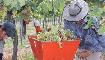 Vendimia: Agroindustria destacó un incremento del 23% en la elaboración de vinos
