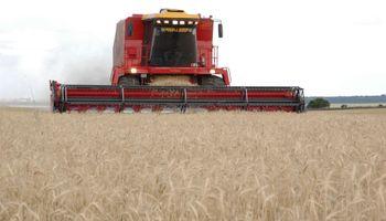 Trigo: Agroindustria cree que la apertura de Brasil no tendrá impacto en la nueva campaña