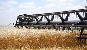 La cosecha de trigo avanzó un 70% y mostró rendimientos que superan los 60 quintales