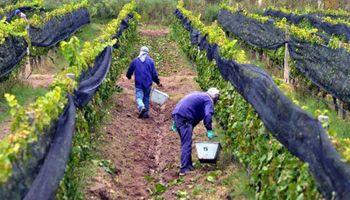 """Productores de vid del Valle de Uco advierten: """"Necesitamos con urgencia ser escuchados"""""""