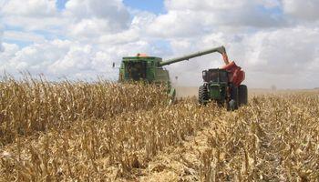 Pasada la cosecha, ¿cómo seguir?: alternativas financieras para productores