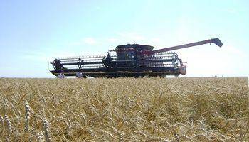 Santa Fe: avanza la cosecha de trigo y el maíz se encuentra en buen estado