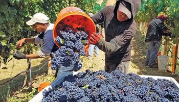 El sector vitivinícola presentó el plan estratégico para el 2020-2030 con foco en la sostenibilidad