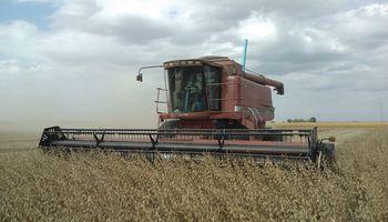 El 20% cosechado de soja indica menos rindes y de baja calidad