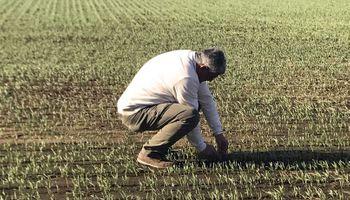El ánimo del campo: un 64% de los productores postergó sus inversiones en la pandemia