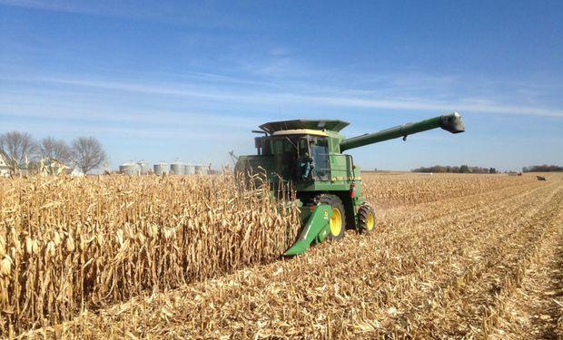 Informe del USDA: el mercado espera un importante recorte para la cosecha de maíz en Estados Unidos