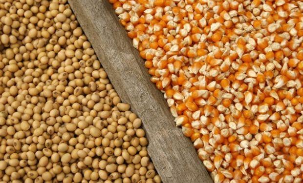El ingreso de la cosecha de maíz y soja pesa en CBOT.