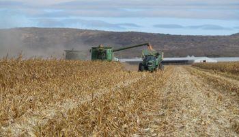 La atención de cosecha ahora pasa al maíz: qué condición tienen los cuadros que resta cosechar