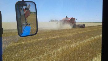 """Los productores vuelven a recibir el precio """"lleno"""" del trigo"""