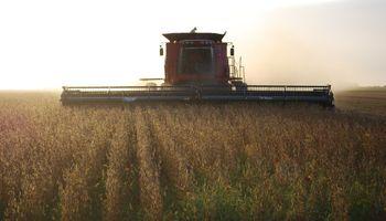 Siembra, cosecha y aporte económico: qué se espera para la campaña agrícola 2020/21