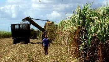 Azúcar: piden subir corte de naftas con bioetanol