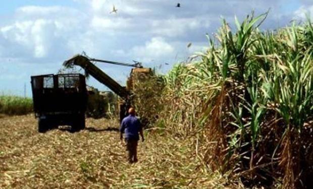 En Argentina funcionan actualmente 14 plantas de bioetanol que producen para su mezcla con nafta.