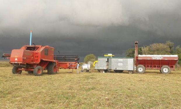 Precipitaciones frenaron el ritmo de las cosechadoras. Foto: Franco Valdez