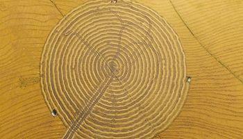 Cosecha circular: la explicación detrás de las llamativas imágenes aéreas de un campo uruguayo