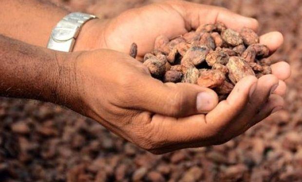 La cosecha de cacao fue la peor de los últimos 70 años tras los destrozos dejados en esa zona por los huracanes Matthew e Irma.