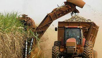 Caña de azúcar: una alternativa en fertilización se consolida en el NOA