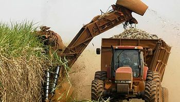 Buscan tecnificar la cosecha de caña de azúcar