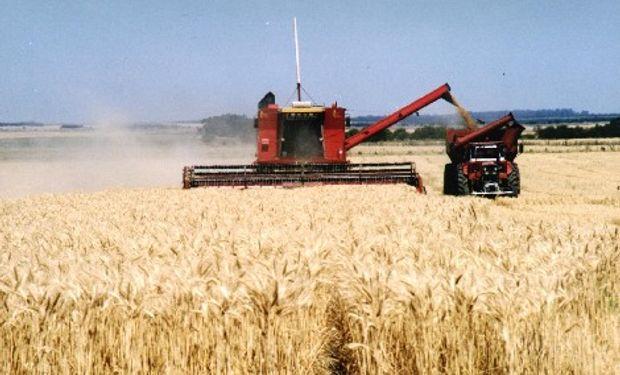Siguen avanzando las tareas de siembra y cosecha
